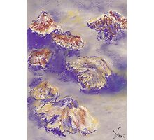 Plein Air Shrooms (pastel) Photographic Print