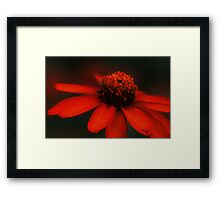 Night Beauty Framed Print