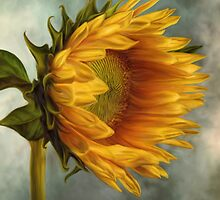 Sunflower  by AnaCBStudio