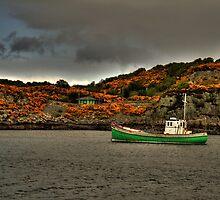 Skye Gorse by Drodbar