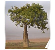 boab tree - town beach, broome Poster