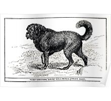 All about dogs a book for doggy people Charles Henry Lane 1900 0321 Thibet Sheepdog Tibet_jpg Poster