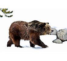 Winter Bear Walk Photographic Print