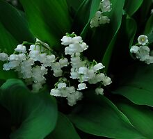 Lily's of the valley III by Jeff Stroud
