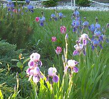 Iris Garden by MarianBendeth