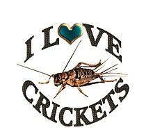 I LOVE CRICKETS PICTURE-PILLOW-TOTE BAG- DRAWSTRING BAGS,CARDS,BOOKS,TEE SHIRTS ECT, by ✿✿ Bonita ✿✿ ђєℓℓσ
