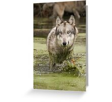 Swamp wolf Greeting Card