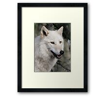 Grey Wolf Portrait Framed Print
