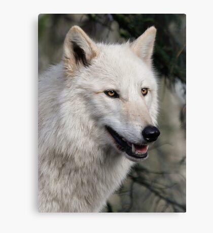 Grey Wolf Portrait Canvas Print
