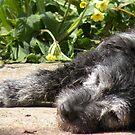 SHHHHHH....Old girl sleeping.. Prayers pls by supernan