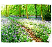 Amonst the Bluebells Turville - Orton Poster