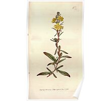 The Botanical magazine, or, Flower garden displayed by William Curtis V9 V10 1795 1796 0146 Oenotera Pumila Dwarf Oenothera Poster