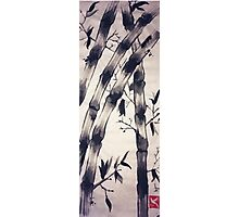 Bamboo Scroll Photographic Print