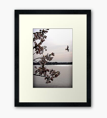 Blossoms in Bloom Framed Print