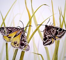 Endangered Golden Sun Moths Watercolour Painting by Heatherian