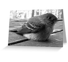 A Stunned Bird Who Lived To Tell It Greeting Card