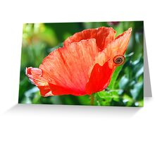 Sunlit poppy head with lodger. Greeting Card