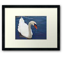 Swan glamour Framed Print