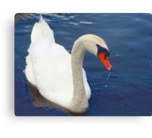 Swan glamour Canvas Print