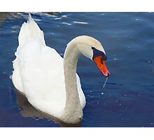 Swan glamour Photographic Print