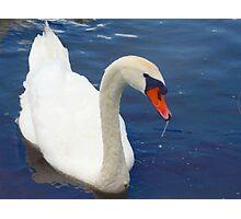 Swan glamour Photographic Print