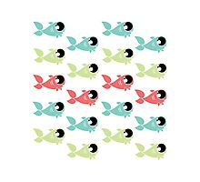 Wittle Fishies Photographic Print