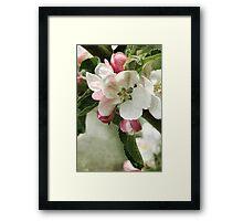 Cherry Pink and Apple Blossom White Framed Print