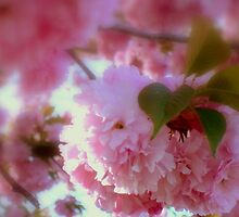 SPRING  ^ by ctheworld
