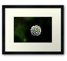 Fluffy Ball Of White Framed Print