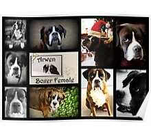 Images Of Arwen - Boxer Dogs Series Poster