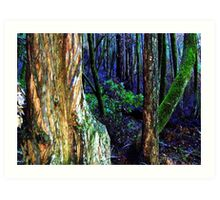 Forest, Northern California Art Print