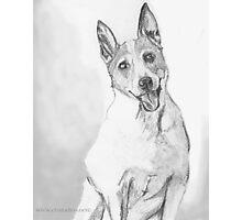 Class Clown- Parson Jack Russell Terrier! Photographic Print