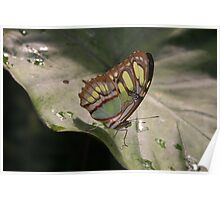 Butterfly Farm, Anglesey Poster