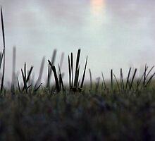Dewy Grass at Dawn  by RTurley