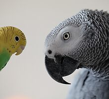 Monti and his new friend :) by Ellen van Deelen