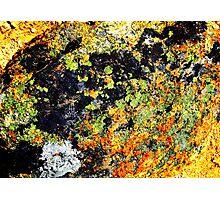 Lichen-Smothered Boulder, Idaho Photographic Print