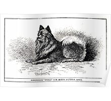 All about dogs a book for doggy people Charles Henry Lane 1900 0257 Pomeranian_jpg Poster