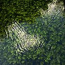 Green river Grza by Aleksandra Misic