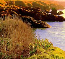 Mendocino Coast # 18,  Northern California by Ascender Photography