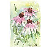 Daisies for healing Photographic Print
