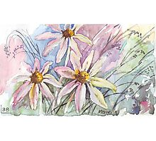 Daisies and weeds Photographic Print