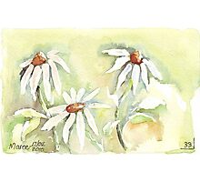 Shasta Daisies for Mother's Day Photographic Print