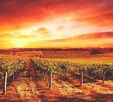 Tuscan Vineyard by Sol Noir Studios