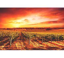 Tuscan Vineyard Photographic Print