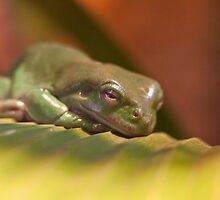 Sleepy Frog by Frank Moroni