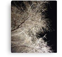 eerie tree in albuquerque Canvas Print