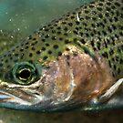 Fish eye by Aleksandra Misic