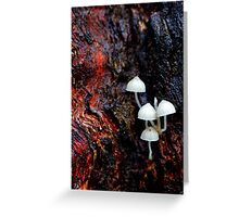 Bark Overture In Red Greeting Card