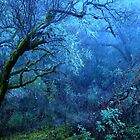Early Mist, Ukiah, California by Ascender Photography