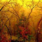 Dawn, Ukiah,  CA. by Ascender Photography